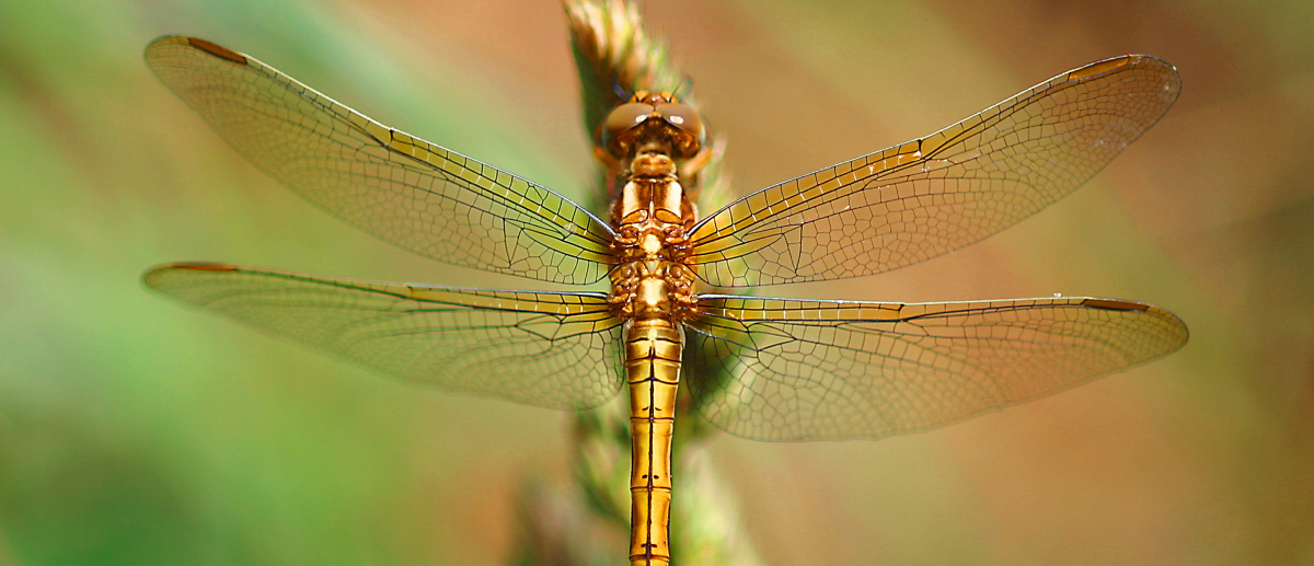 The dragonfly represents my four-step coaching process. It's all about transformation!