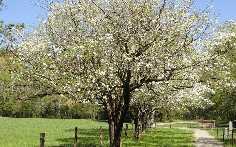 spring in Georgia