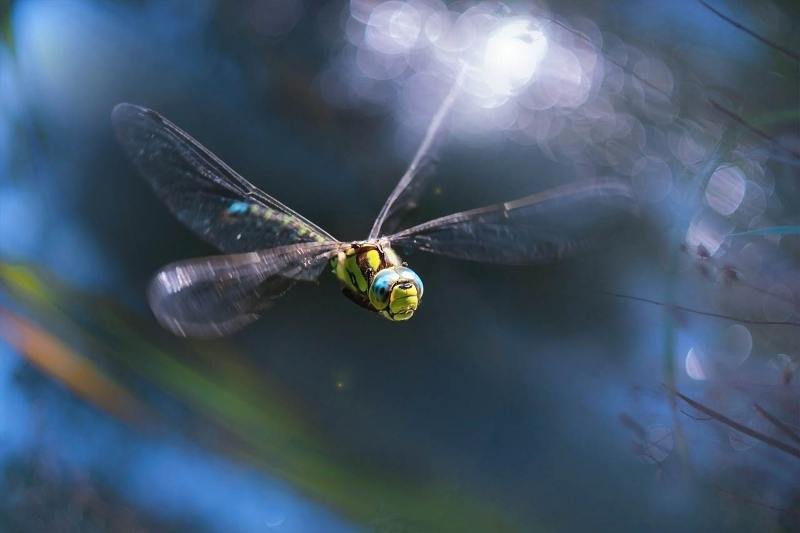 dragonfly as sign of transformation